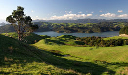 Beautiful green NZ landscape